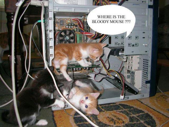 Where is the bloody mouse